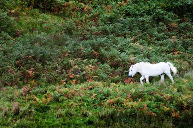 white-horse-highlands-scotland